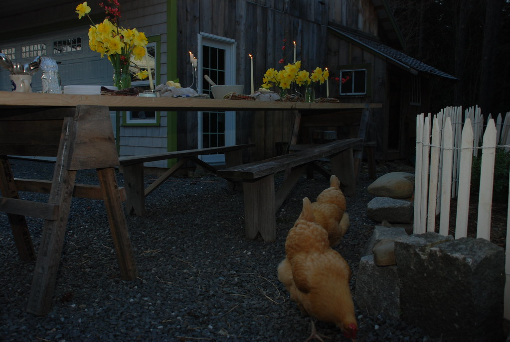 chickens inspecting the table area