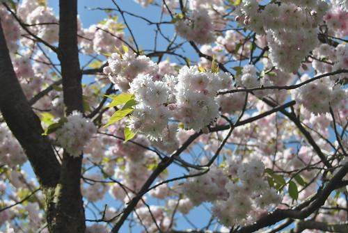 Detalle de un árbol en flor