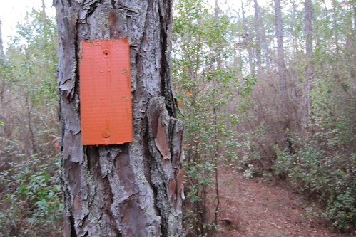 Florida Trail 107