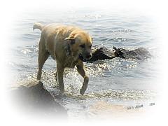 I need a towel... (Eva's PhotoAlbum) Tags: blue summer dog white black water june yellow rocks sweden bergslagen skinnskatteberg vestmanland