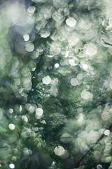 Just Bokeh Blues (Gordana AM) Tags: camera ontario canada green water rain garden photography photo droplets drops rainbow photographer bokeh many sparkle flare windsor after dripping gordana maybeetsy lepiafgeo wwwgordanaphotocom