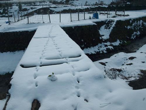雪の大原 (61)
