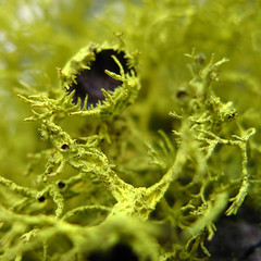 Monster lichen (kevin dooley) Tags: california winter favorite cold tree green beautiful monster creek wow interesting fantastic flickr pretty very good gorgeous awesome award superior super best explore most valley winner stunning excellent olympia much lichen incredible breathtaking exciting squaw phenomenal