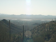 Saguaro 10 (a987checkers) Tags: saguaronationalpark wassonpeak