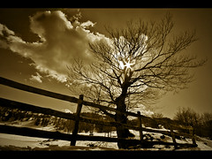 Albero controluce [Tree silhouette] (ecatoncheires) Tags: bw cloud white snow black tree silhouette fence interestingness branch nuvola sigma dry explore neve 1020mm albero 1020 controluce rami secco steccato explored