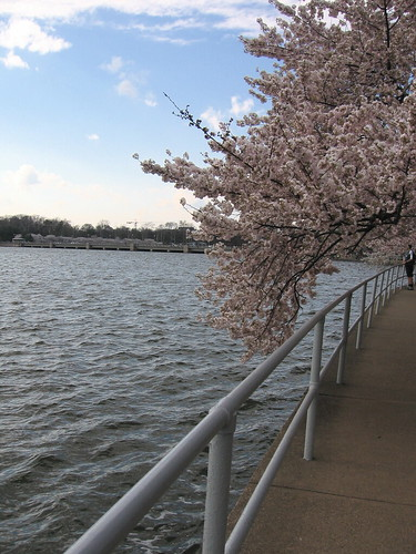 blossoms & railing