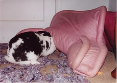 That Nasty Pillow!