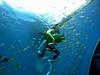 Hakkei Jima Sea Paradise