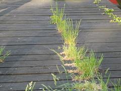 Kastellet 10 (biedk) Tags: bridge copenhagen denmark bro danmark kbenhavn kastellet