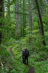 針葉樹の林を抜ける