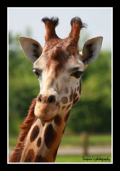 Are you looking at me! (Tarquin's Photography.) Tags: africa wild pets face animals zoo parks loveit