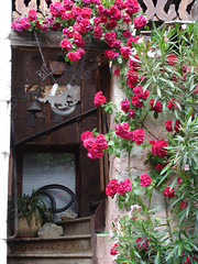 Welcome ! (Michele*mp slowly catching up) Tags: flowers house stairs fleurs geotagged europe country decoration welcome bienvenue laurier maison campagne escalier entre abigfave irresistiblebeauty lesmarches michelemp geo:lat=45497954 geo:lon=6001803