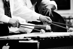 Working (s0phi3 / ) Tags: bw white playing black musicians concert hands bokeh live jazz mani concerto musica mickeymouse necktie biancoenero jazzmusic musicisti cravatta vibrafono hbw contrabasso nikond40x bokehwednesday