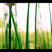 Early Green Photo 3