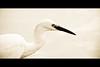 Horizontals: Bird portrait (manganite) Tags: park white lake color heron topf25 birds animals japan sepia digital geotagged tokyo nikon asia ueno tl framed 日本 nippon 東京 desaturated d200 nikkor dslr toned onwhite nihon kanto uenokoen shinobazu interestingness379 18200mmf3556 utatafeature manganite nikonstunninggallery anawesomeshot geo:lat=35711847 geo:lon=139770482 format:orientation=landscape format:ratio=21