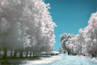 Ice grove.