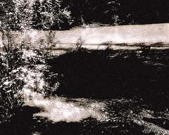 Down By The River (LostMyHeadache: Absolutely Free *) Tags: flowers trees light shadow blackandwhite white black flower reflection calgary nature water monochrome leaves creek river dark outdoors blackwhite flora stream glow darkness natural branches young neil monochromatic alberta gleam 2008 neilyoung lightness calgaryalberta davidsmith fishcreekpark downbytheriver shads blackwhitephotos bebogrove