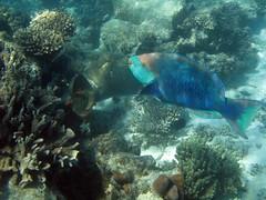 Turquoise Bay (C) 2008