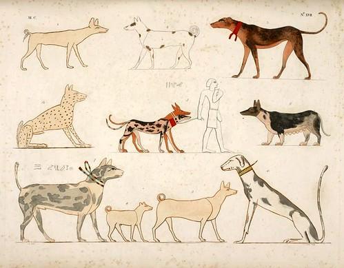 08- varias especies de perros de la epoca egipcia