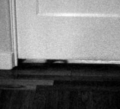 Shadow of cat's ears, visible under door