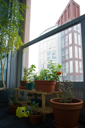 Balcony Bliss: high-rise herb garden