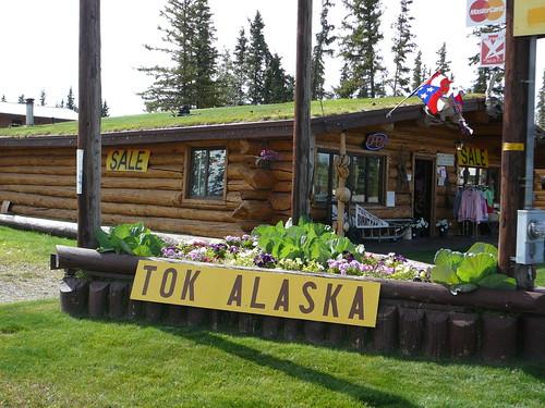 Llegamos a Tok ! ultimo pueblo en Alaska
