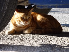 speriamo non metta in moto proprio ora.. (luana183) Tags: street shadow sun car cat chat strada ombra santorini greece grecia gato piazza miao sole gatto macchina parcheggio micio ruote cicladi perissa baffi gattorosso musino zampina catnipaddicts