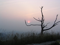 Sunset in Shenandoah (baltic_86 (mostly off)) Tags: pink trees sunset usa tree beautiful virginia searchthebest 300views fabulous 50 soe breathtaking worldclass drzewo zachodslonca supershot treepics bej rozowy the4elements abigfave parknarodowy olympususers journeytopeace iinstantfave bestsunsetandsunrise leagueofwomen acelebrationoflight goldstaraward overtheshot yourcountry 100commentgroup baltic86 shenandoachnationalpark cartelpink