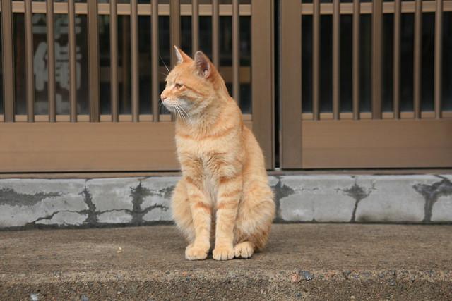 草津・湯畑の猫