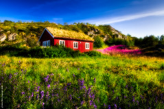 The Little Cabin (Rob Orthen) Tags: flowers summer sky color norway clouds landscape cabin nikon europe meadow august rob hut scandinavia polarizer lofoten maisema archipelago kes d300 norja saaristo elokuu niitty orthen nikon175528 lofootit littlecabin roborthenphotography norjansaaristo thelofots sorvgen