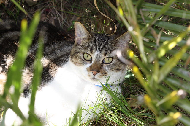 Rocky relaxin in the garden, striking eyes!