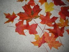 foliage2008 (june33813) Tags: