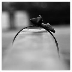 August 21st (Oliver Wilke) Tags: bw white black oneaday fashion grey dof bokeh gray tie grau bow photoaday sw ribbon 365 grayscale schwarzweiss mode weiss schwarz greyscale pictureaday august21 schleife gossipgirl aliceband 21august graustufen project365 haarreifen haarreif project365210808