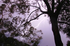 Lightning in the gum trees
