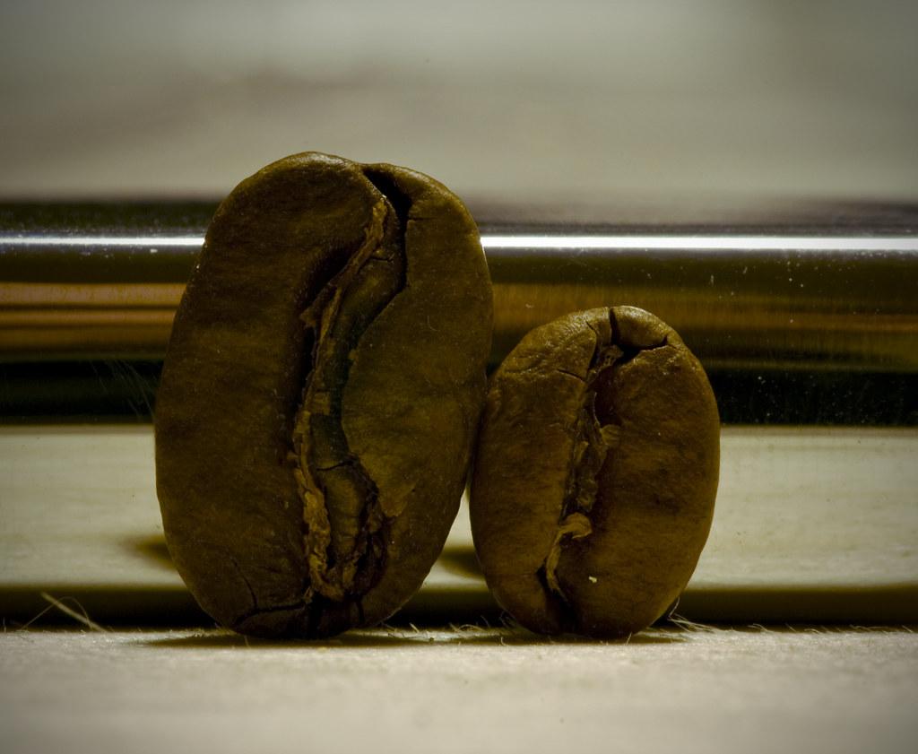 Afbeeldingsresultaat voor Maragogype-koffie