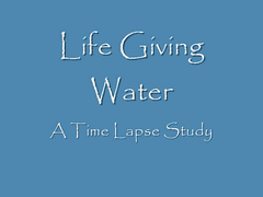 Life Giving Water - Time Lapse (Tracey Tilson Photography) Tags: november plant water timelapse video explore 2008 danfogelberg d90 timelapsephotography stillshots nikond90 tothemorning nikond90club