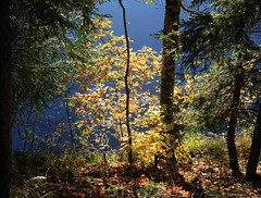feuilles et tang (rariflora) Tags: autumn trees water leaves norway automne norge eau blad arbres porsgrunn fort vann feuilles hst trr norvge klyve kunstplatzlinternational kverndammen