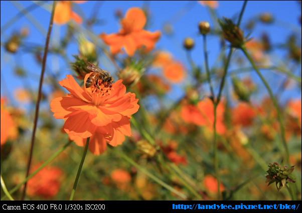 9711-新社花海:Date with Bee_098.jpg
