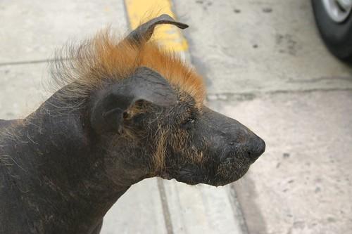 The Trendy Dog. Miraflores, Peru.
