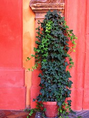 Sevilla (Graça Vargas) Tags: españa plant canon sevilla spain ph227 realesalcázares graçavargas ©2008graçavargasallrightsreserved 4110160109