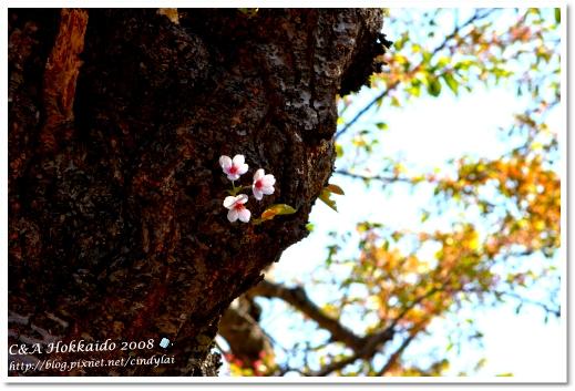 Hokkaido_2354