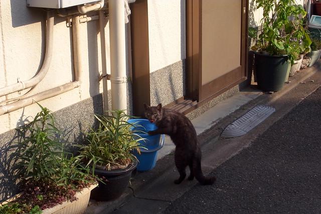 Today's Cat@2011-05-19