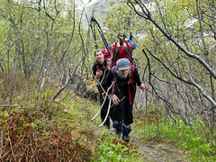 Skitur (Morten Ødegaard) Tags: nature norway forest norge spring hiking no skog mountaineering skis vår kratt fjellsport