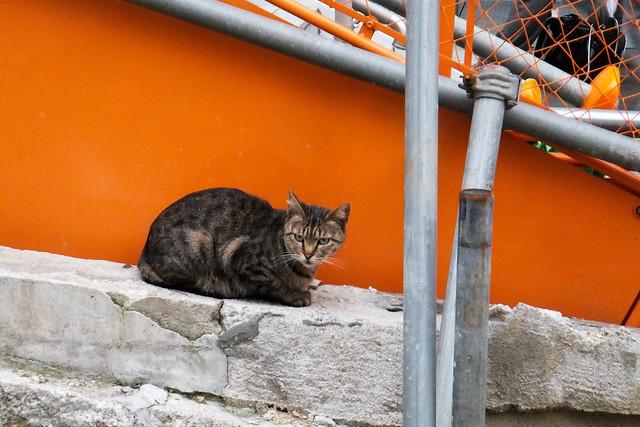 Today's Cat@2011-06-15