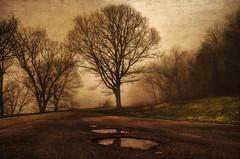 Darkness... (jaegemt1) Tags: mist reflection tree fog dark landscape textures naturepoetry jaegemt1 blinkagain bestofblinkwinners