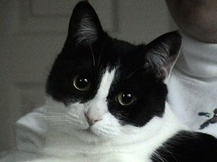 Rosie (The Bagels) Tags: cats pets rosie blackandwhitecats camfmar08