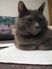 on my homework (Leya :P) Tags: