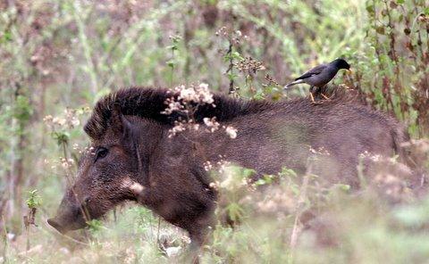 piggy-back ride k gudi 180308