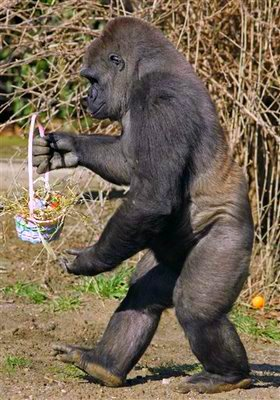 Easter Gorilla in Cincinnati Zoo
