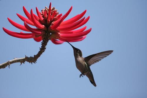 friendly hummingbird